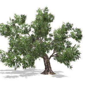 Adopteer een Olijfboom olijfolie abonnement voucher